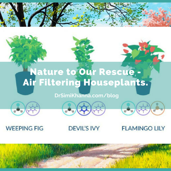 Nature to Our Rescue – Air Filtering Houseplants.